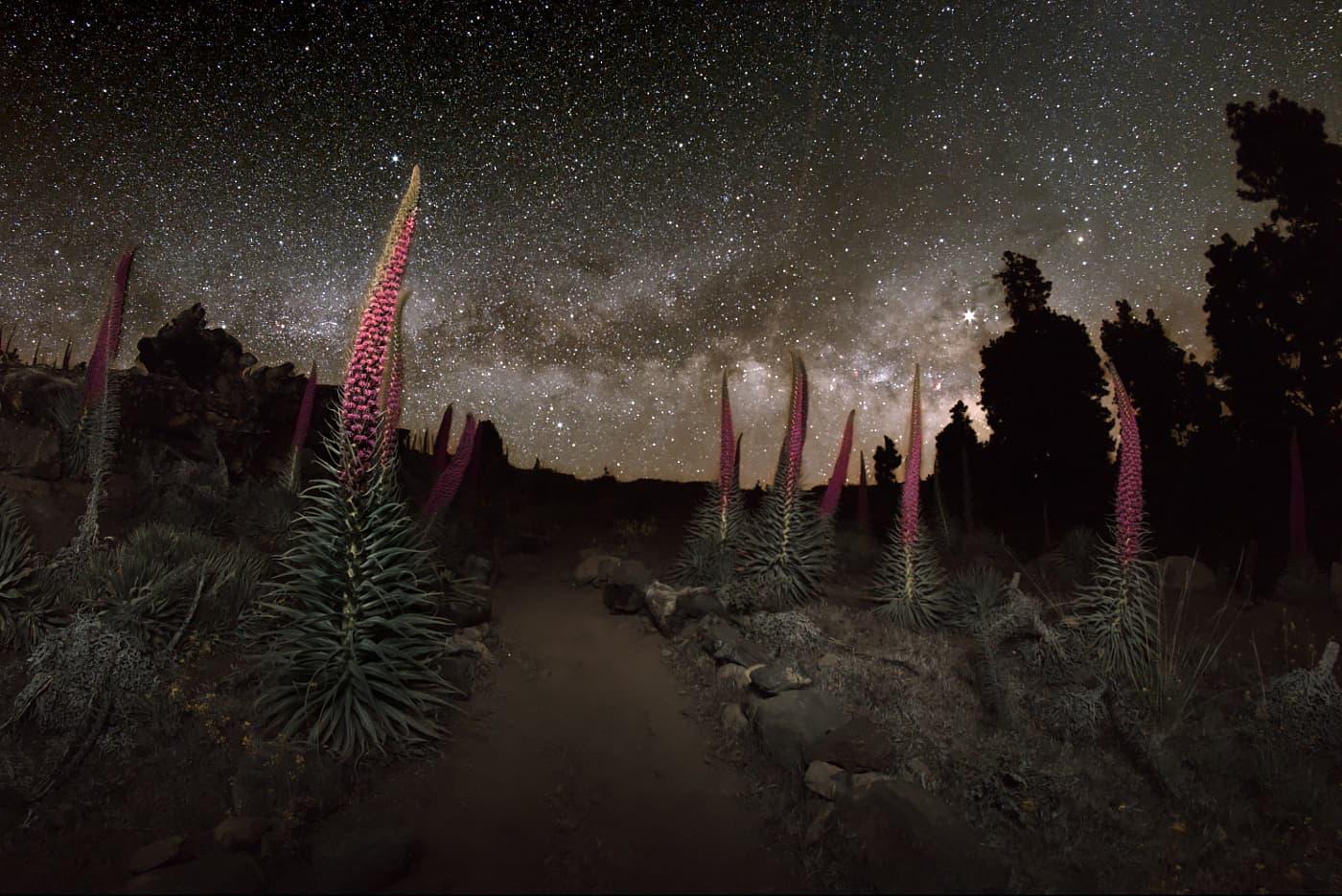 Tajinaste und die Milchstraße