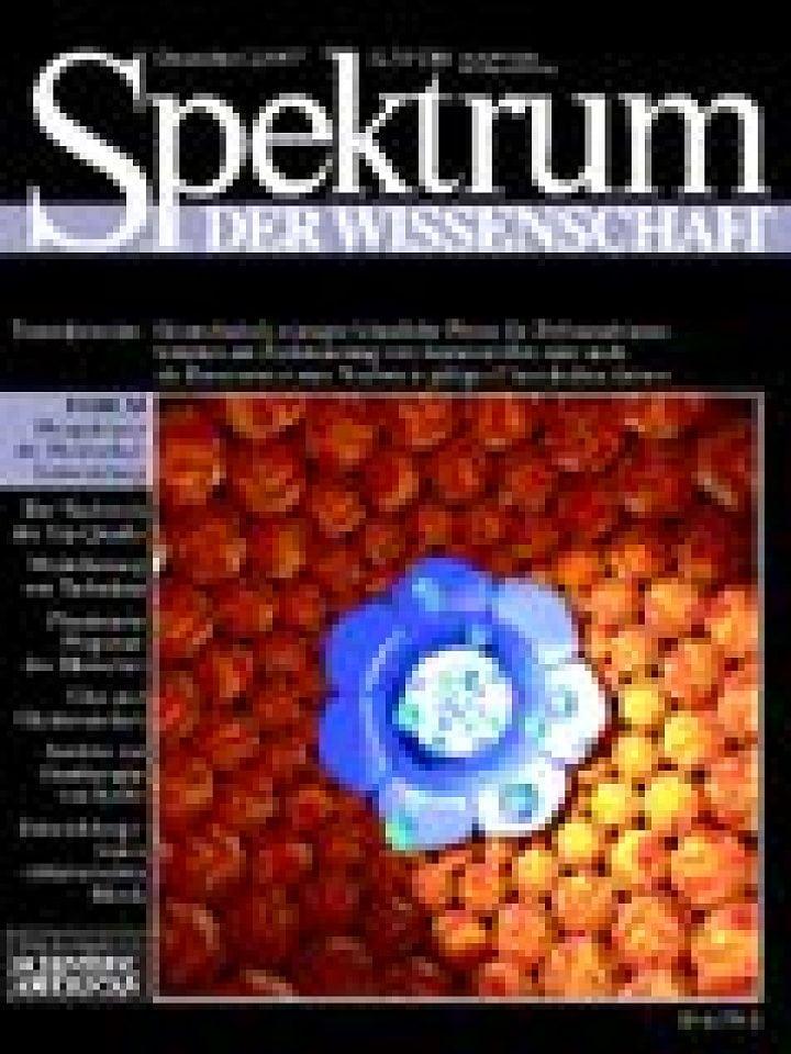 Plastination: neue Körperpräparate - Spektrum der Wissenschaft