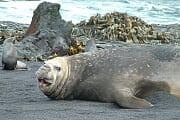 Ozeane: Außergewöhnliches Treibgut erreicht Antarktis