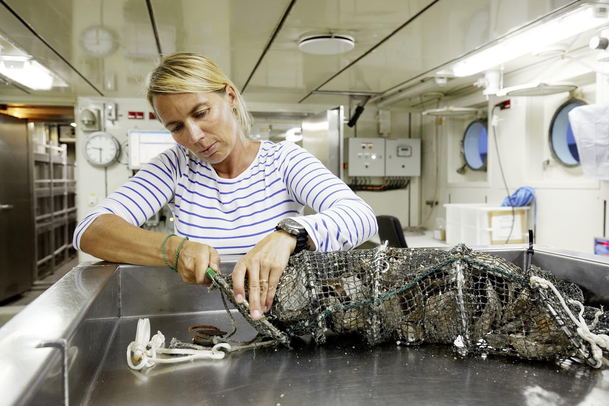 Bernadette Pogoda füllt Austernschalen in Netze