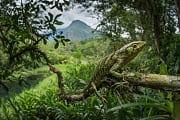 Naturschutz: Ökotourismus für den Frieden?
