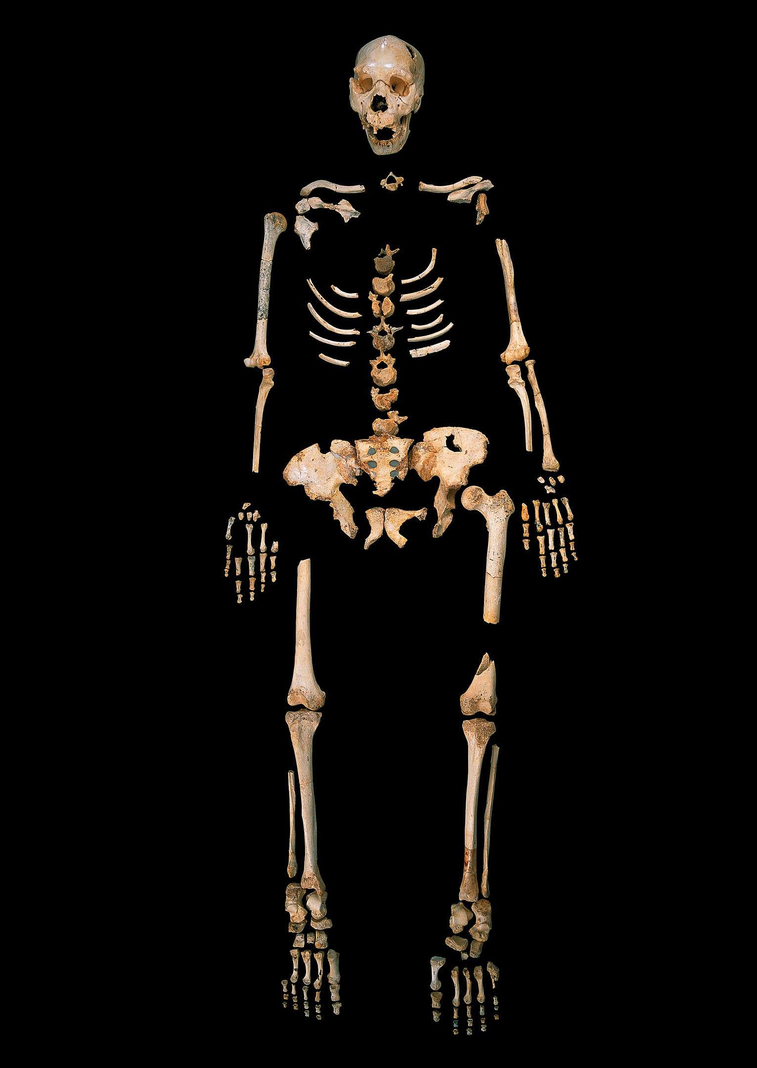 Alte DNA: Erbgut von Homo heidelbergensis schreibt Geschichte neu ...