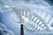 Gentechnik: Falsche Schnitte der CRISPR-Genscheren