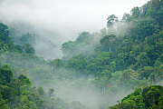 Klimawandel: Wie viel Kohlendioxid kann die Erde noch schlucken?