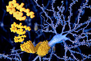 Alzheimer Beta-Amyloid