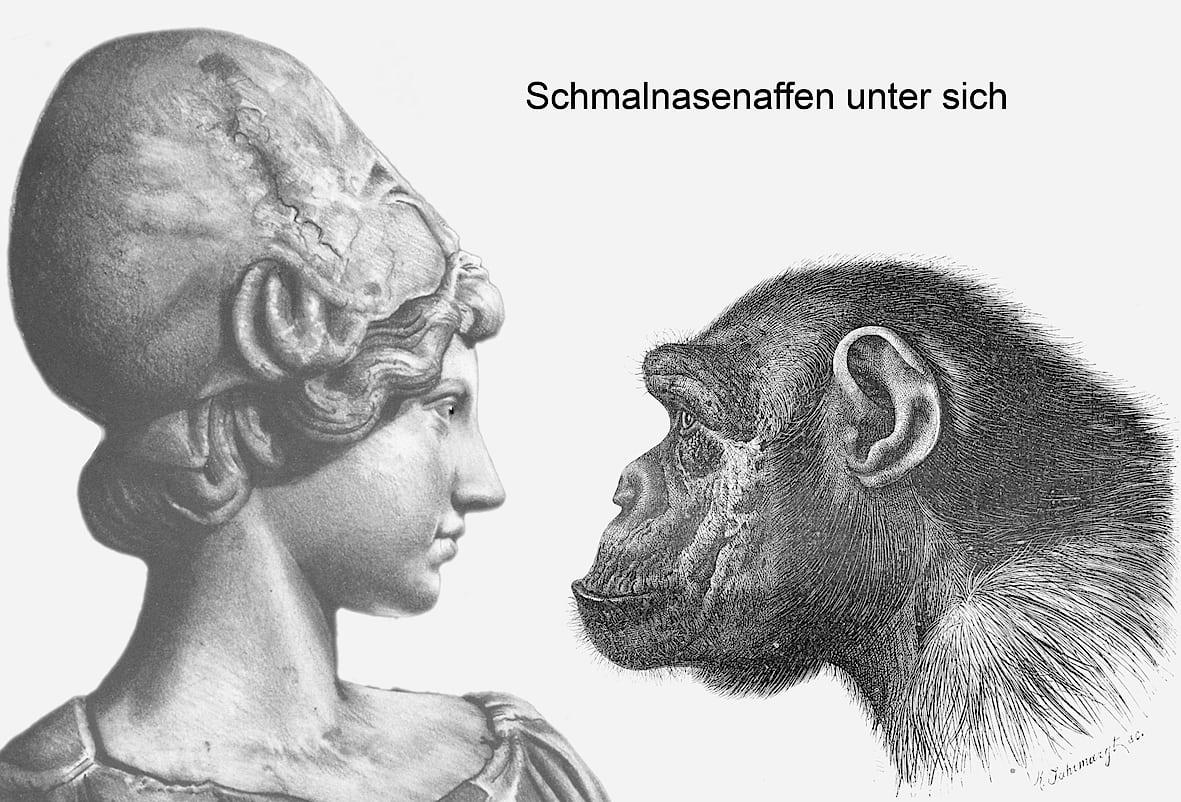Über Nasen - Spektrum der Wissenschaft