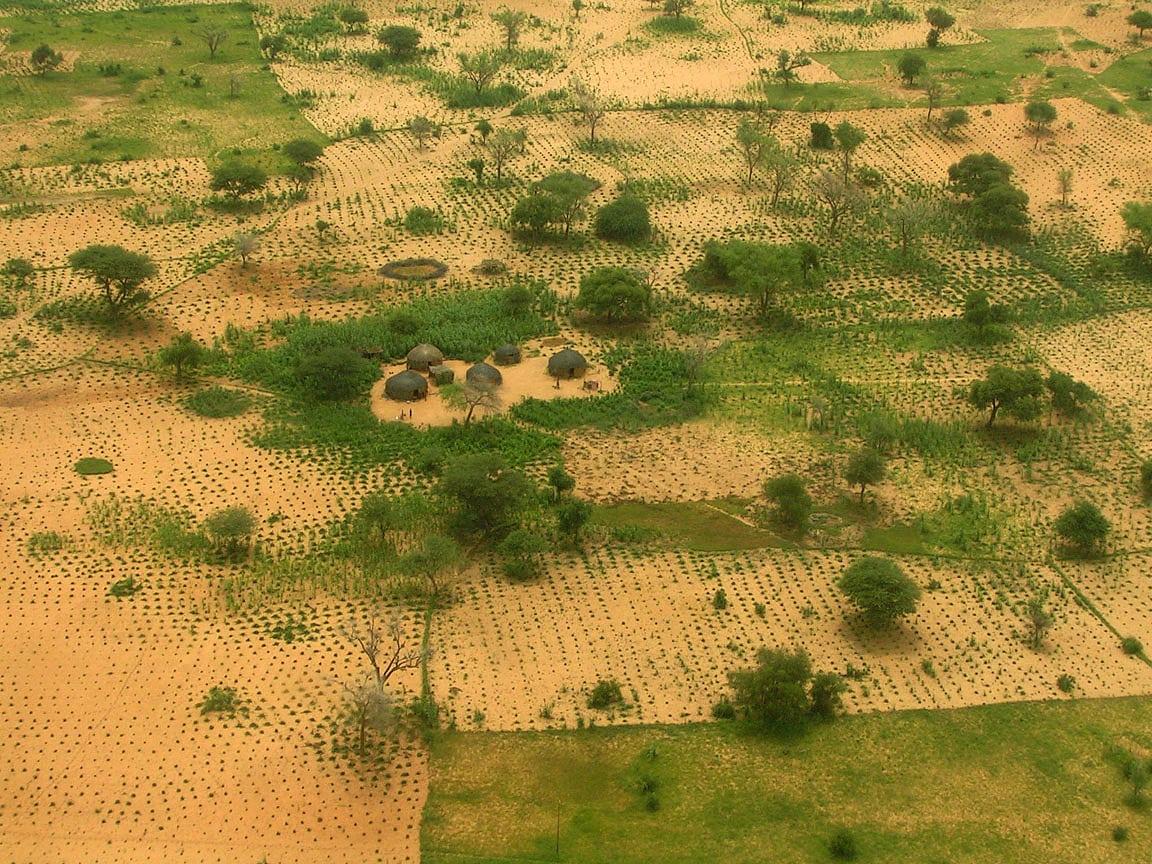 FMNR-Maßnahmen rund um ein Dorf in Niger