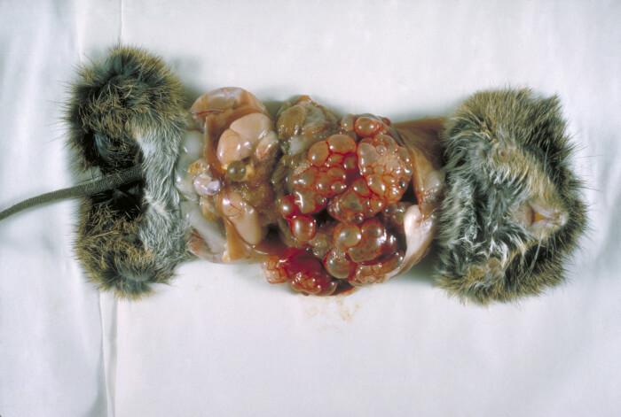 Die Methoden der Forschung der Fäkalie auf die Eier der Würmer