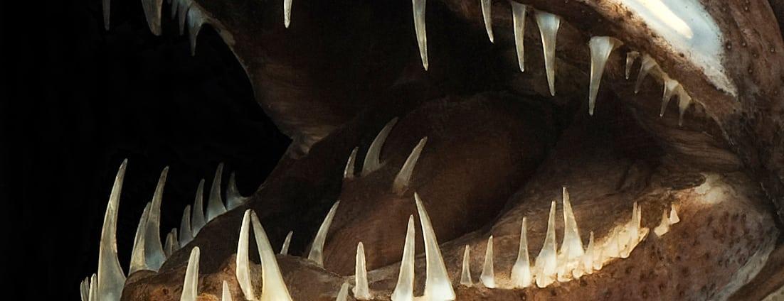 Die 10 faszinierendsten Tiere der Tiefsee - Spektrum der Wissenschaft