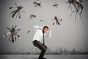 Moskitoabwehr: Natürliche Konkurrenz für Antimückenmittel