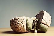 Ein Modell des menschlichen Gehirns