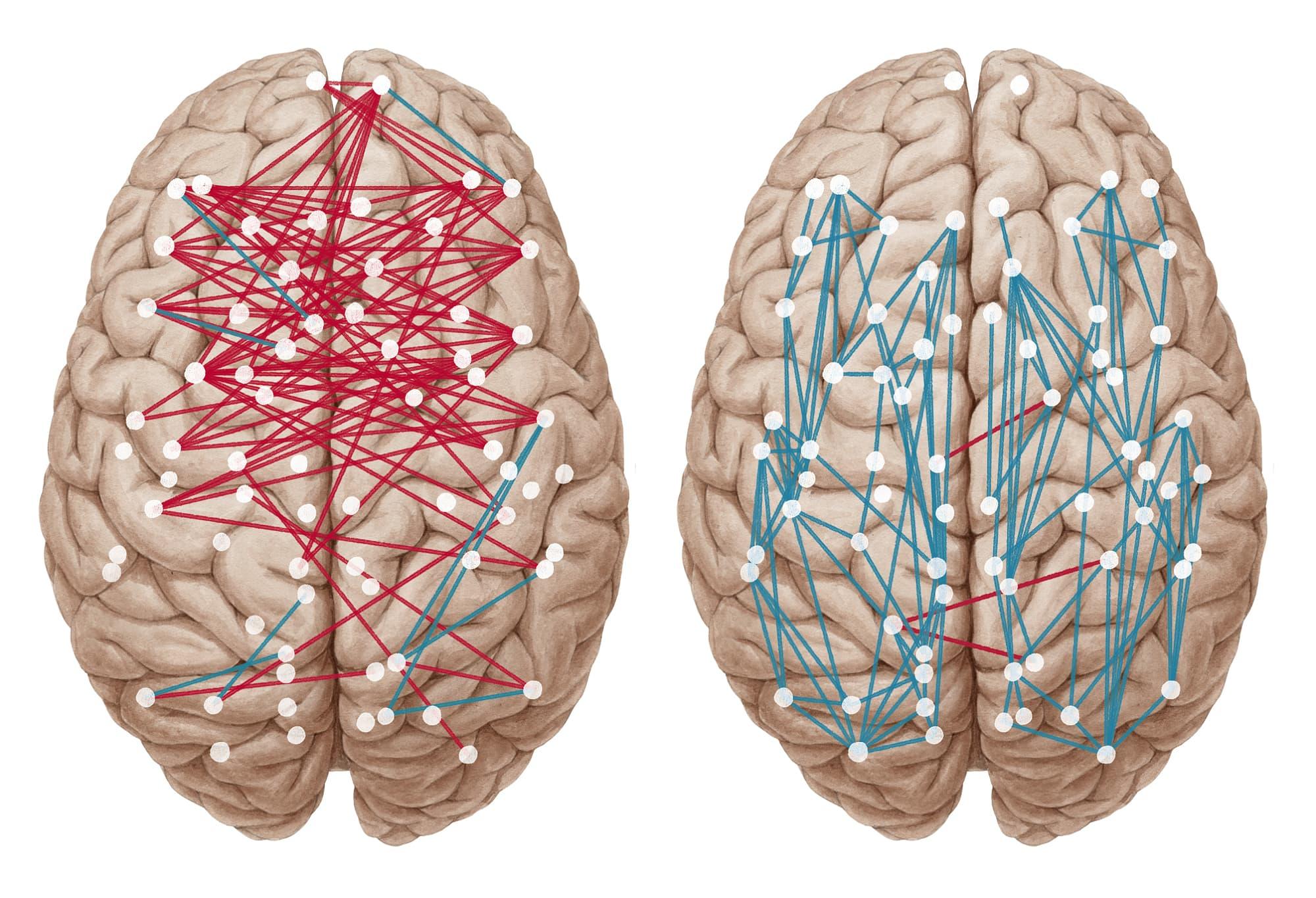 Gibt es Geschlechterunterschiede im Gehirn? - Spektrum der Wissenschaft