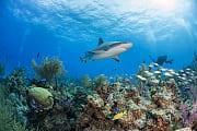 Umweltschutz: Trump-Regierung will Schutzgebiete für Fischerei frei geben