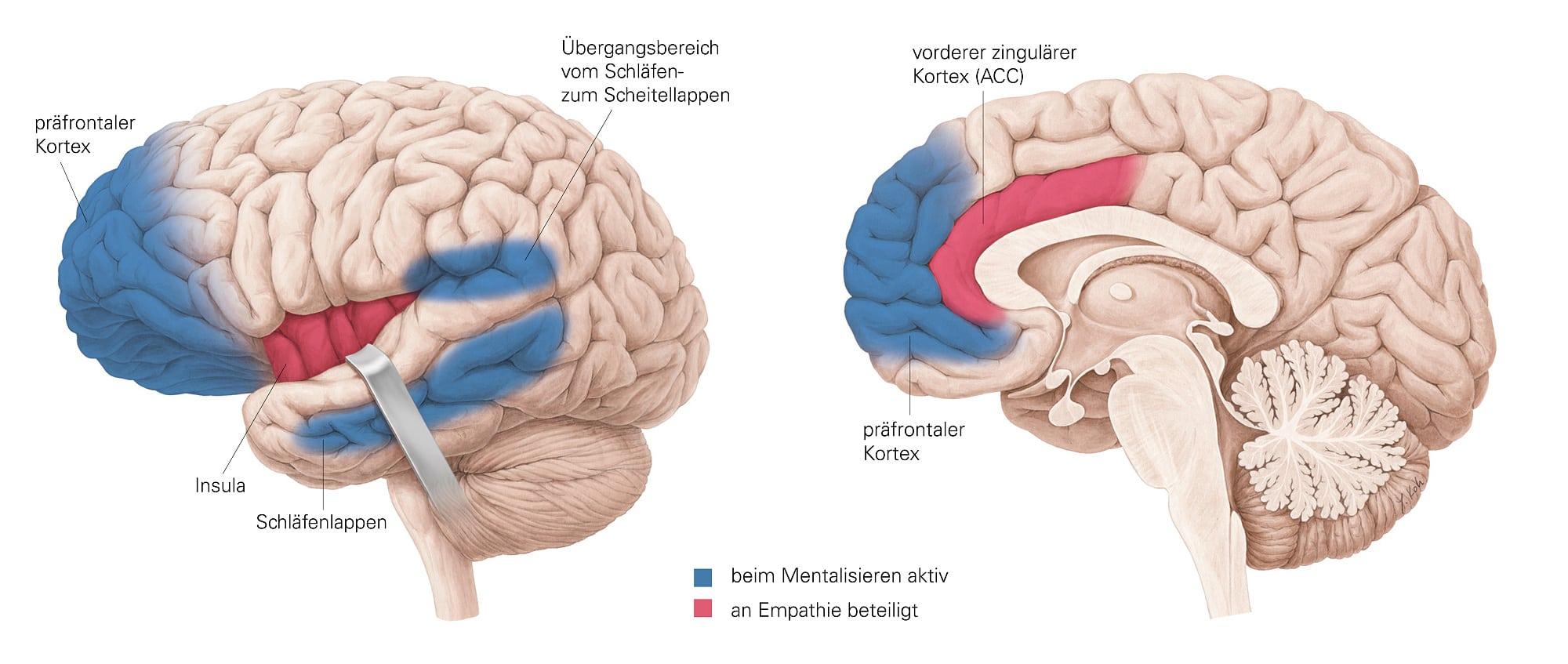 Empathie lässt uns unklug entscheiden - Spektrum der Wissenschaft