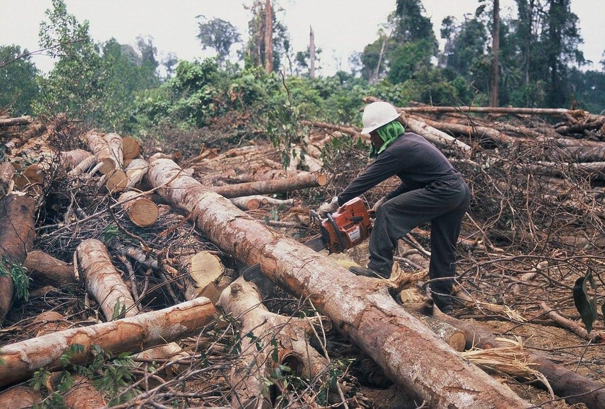Abholzung Der Wälder