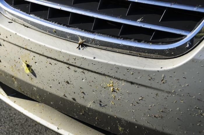 Tote Insekten am Kühlergrill
