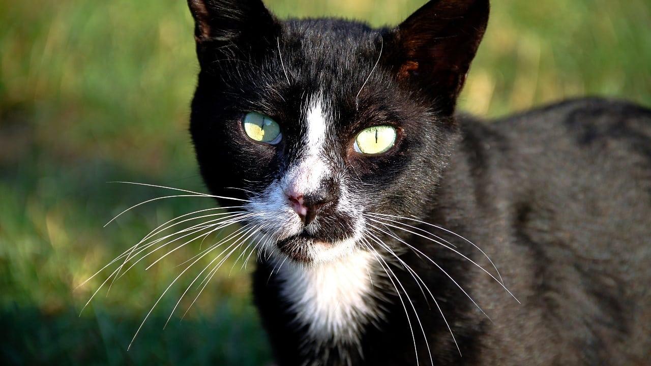 Warum können Katzen nachts sehen und Menschen nicht? - Spektrum der ...