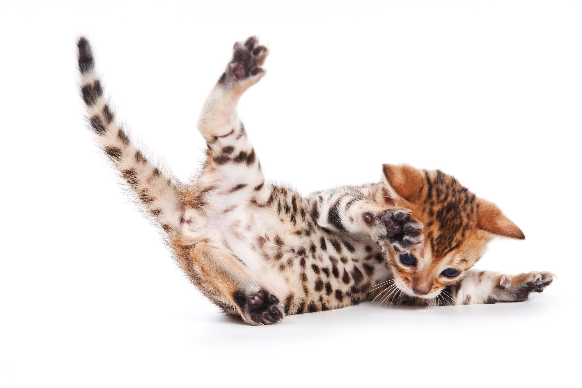 Fantastisch Schaltplan Der Katze 5 Für Internet Bilder - Schaltplan ...