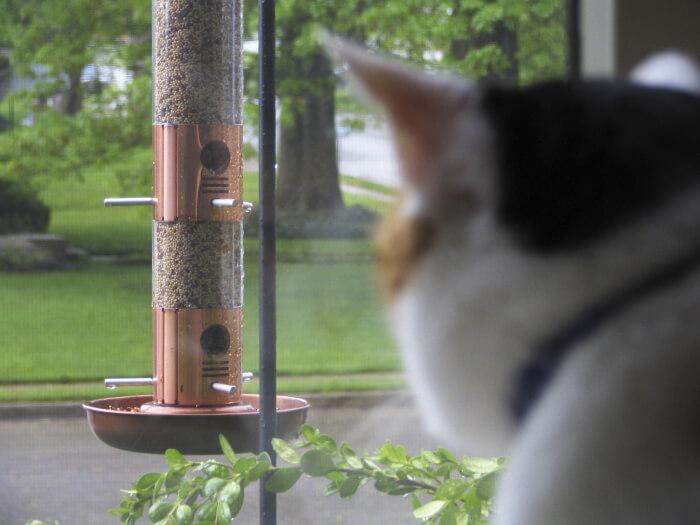 naturschutz schaden katzen unserer vogelwelt spektrum der wissenschaft. Black Bedroom Furniture Sets. Home Design Ideas