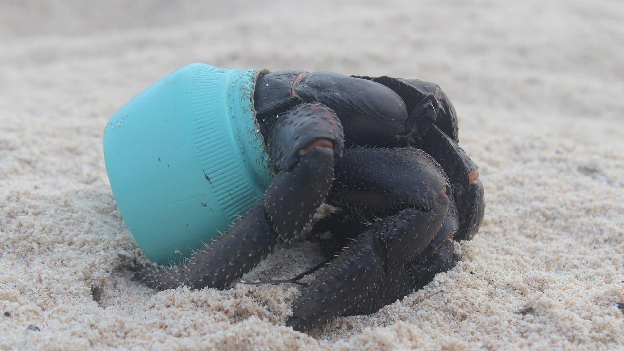 Einsame Inseln: Plastikmüll wird zur Todesfalle