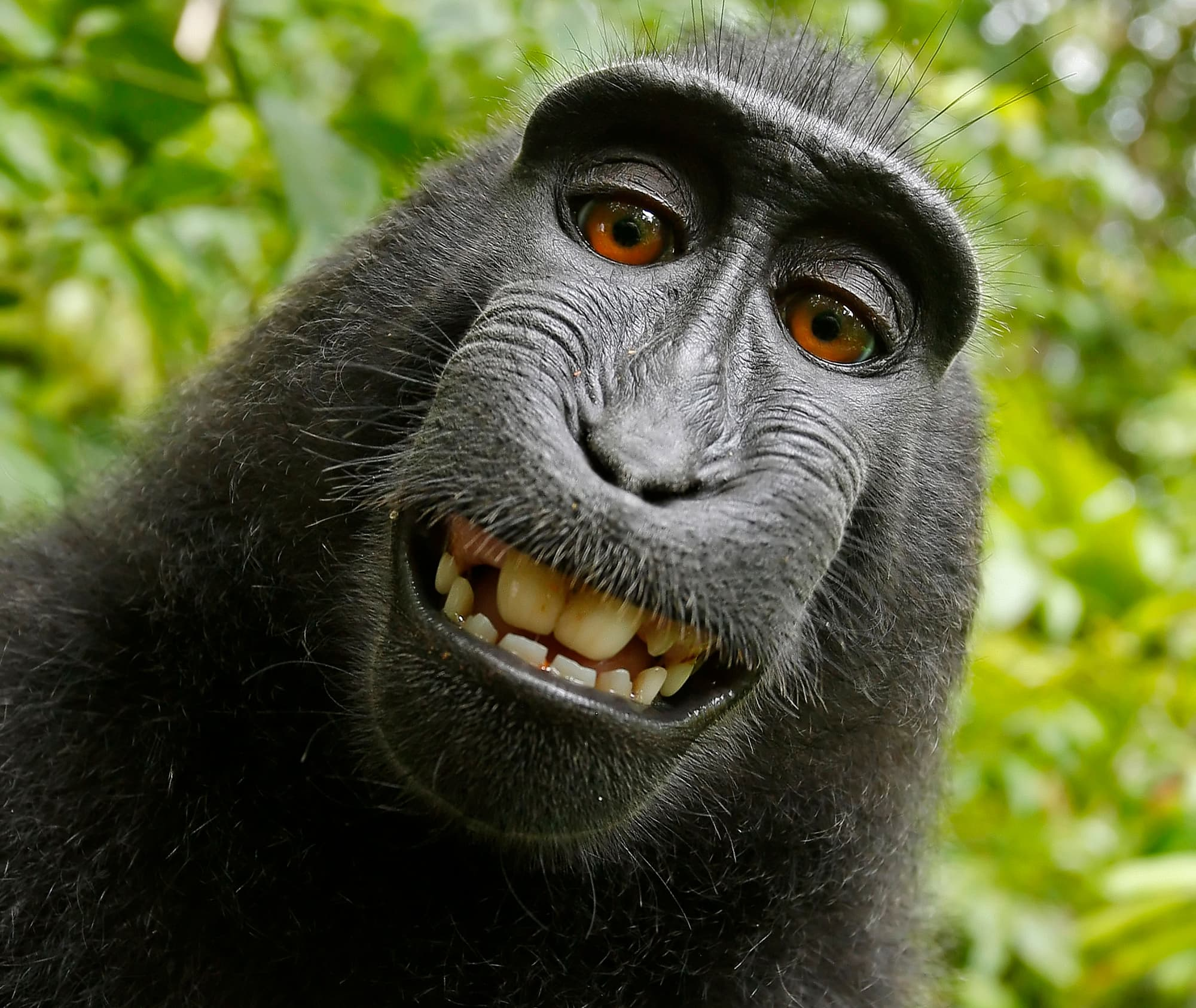 Affen 10 Grunde Warum Man Makaken Einfach Lieben Muss Spektrum