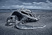 Meeresschutz: Ist der Ozean noch zu retten?