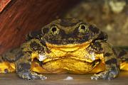 Bilder der Woche: Der einsamste Frosch der Welt hat bald Sex