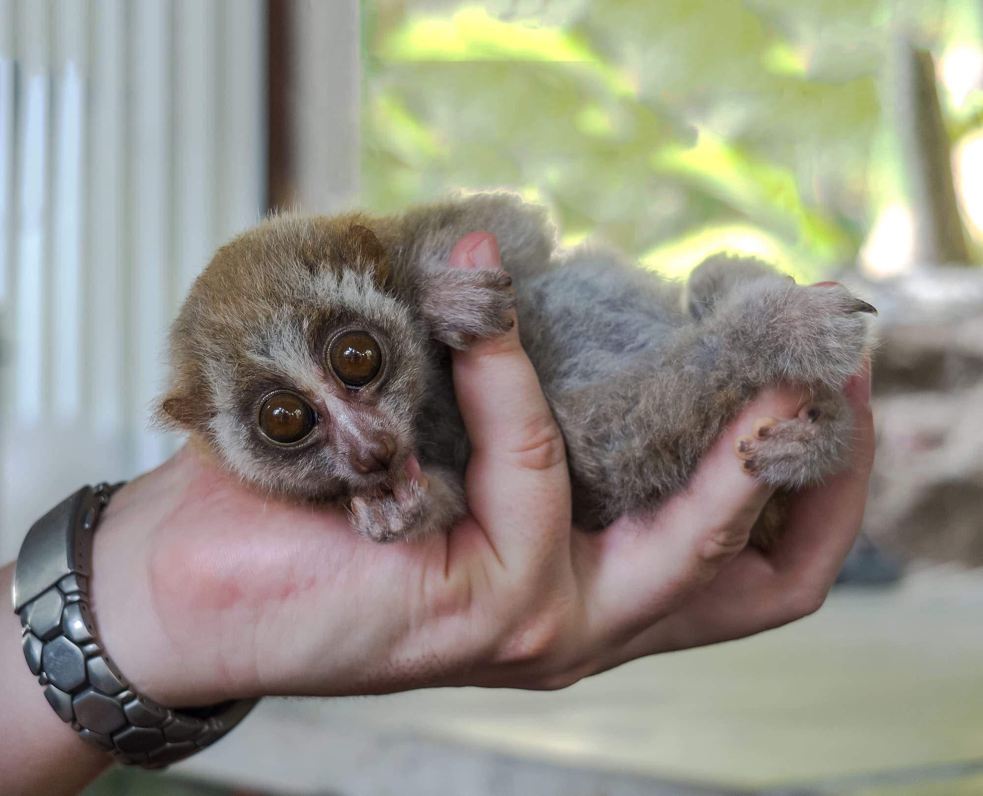 Illegaler Wildtierhandel Ein Affe Im Warenkorb Spektrum Der