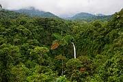 Insektensterben: Klimawandel dezimiert Nahrungskette im Regenwald