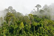 Biomasse: Die Menschheit wiegt so viel wie alle Termiten