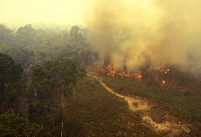 Kampf um den gr ten regenwald der erde spektrum der for Boden im regenwald