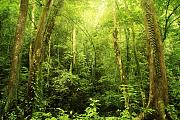 Geruchswahrnehmung: Jäger beschreiben Düfte treffender