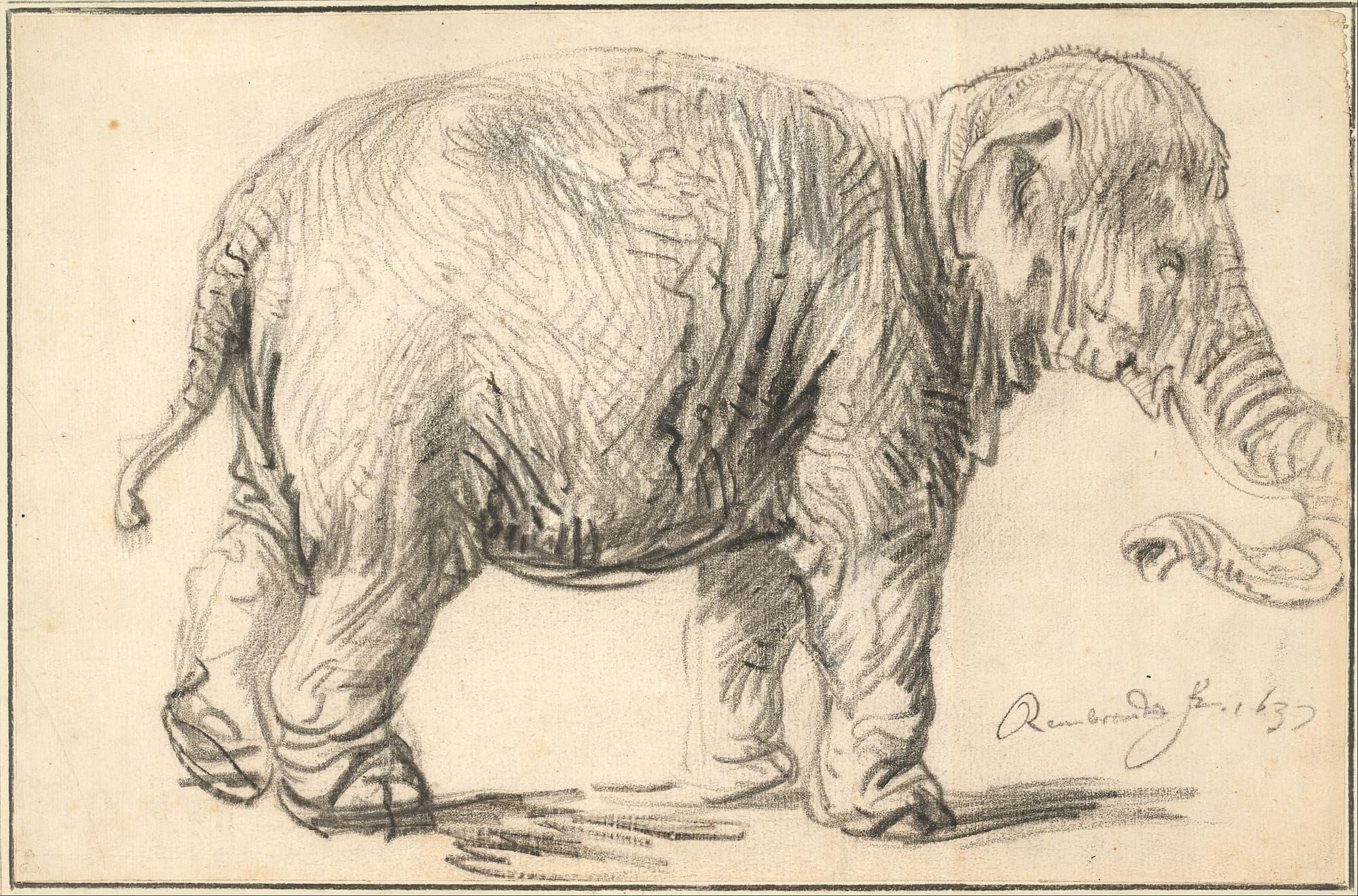 Carl von Linné: Der falsche Elefant - Spektrum der Wissenschaft