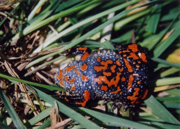 Landwirtschaft und Artenschutz schließen sich nicht aus - Spektrum der Wissenschaft