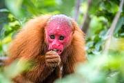 Artenvielfalt: Hoffnung für die Hässlichen