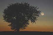 Beobachtungstipps für Amateurastronomen: Stelldichein von Mond und Planeten