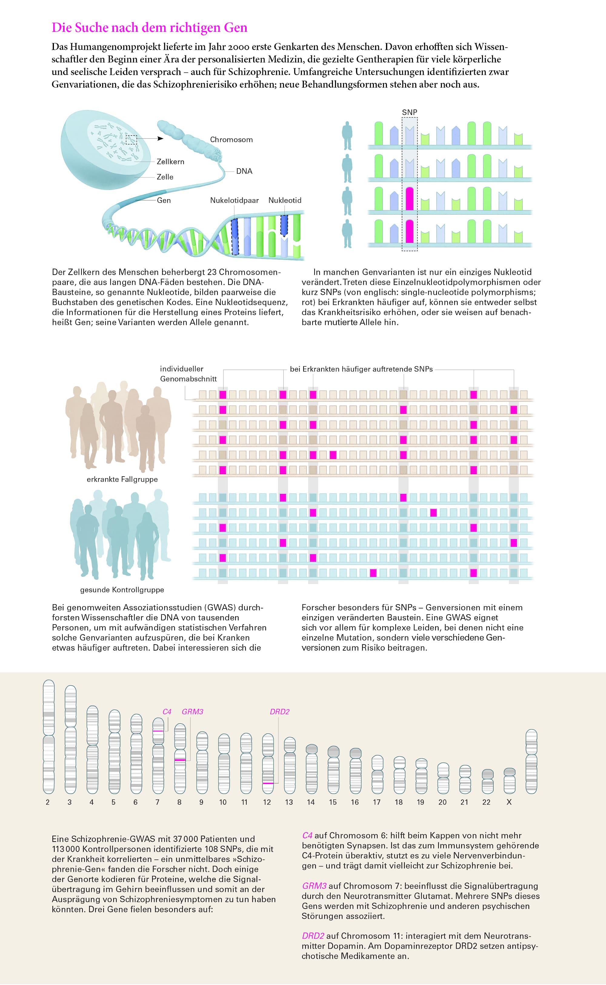Genstudien: Gibt es ein Schizophrenie-Gen? - Spektrum der Wissenschaft