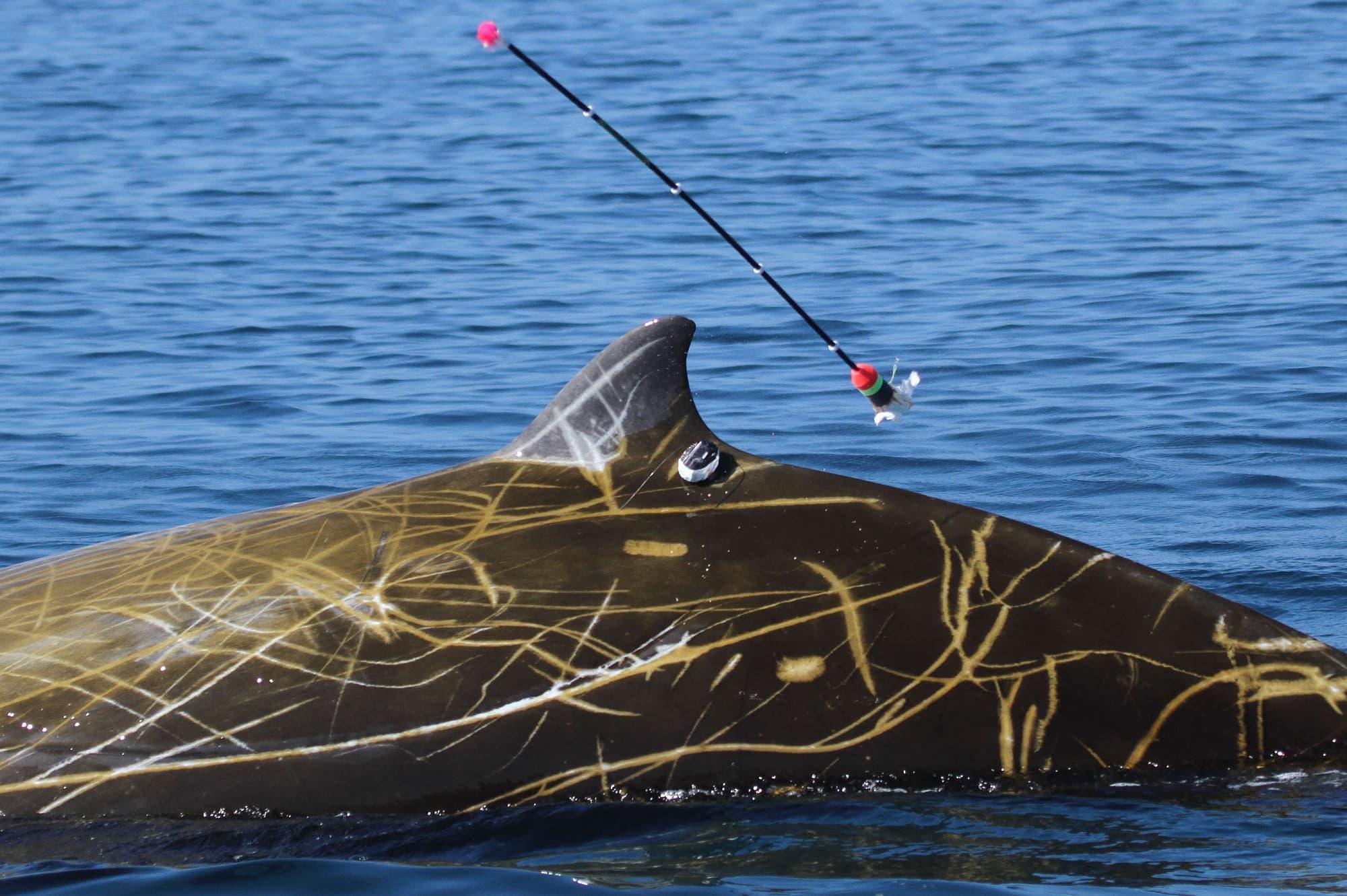 Meeressäuger: 10 faszinierende Fakten über Wale - Spektrum der ...