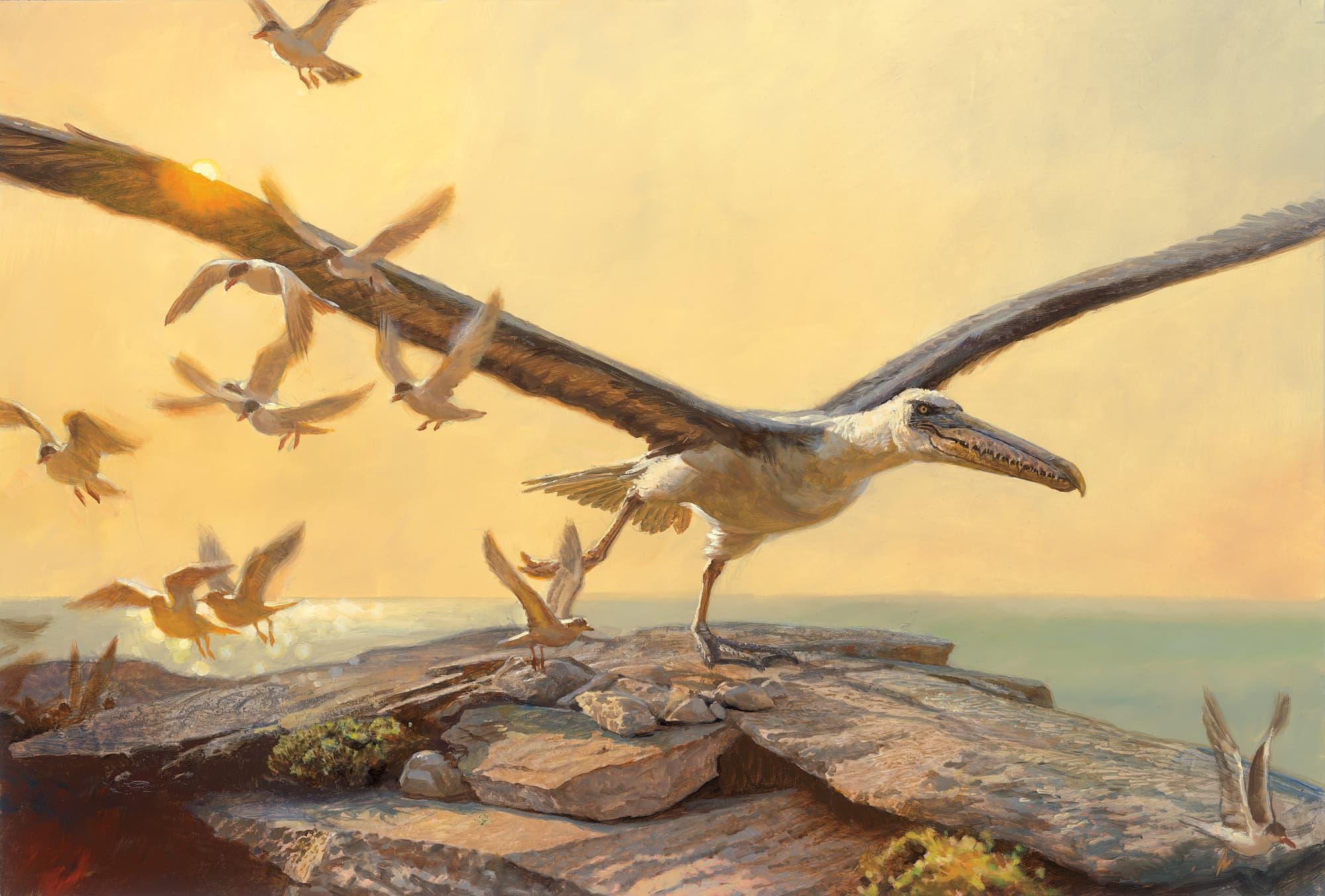 Urzeit Die Größten Vögel Aller Zeiten Spektrum Der Wissenschaft