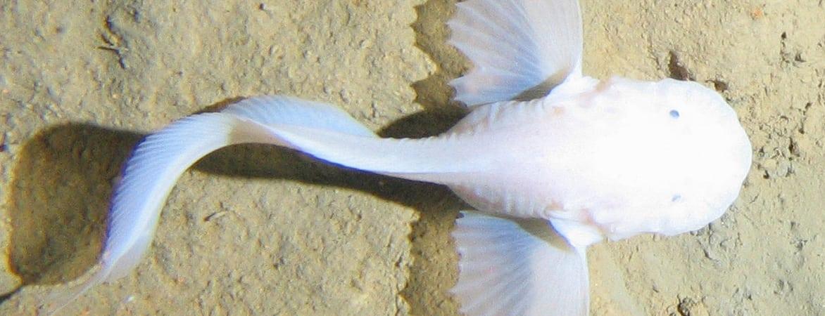 Tiere Im Atlantischen Ozean