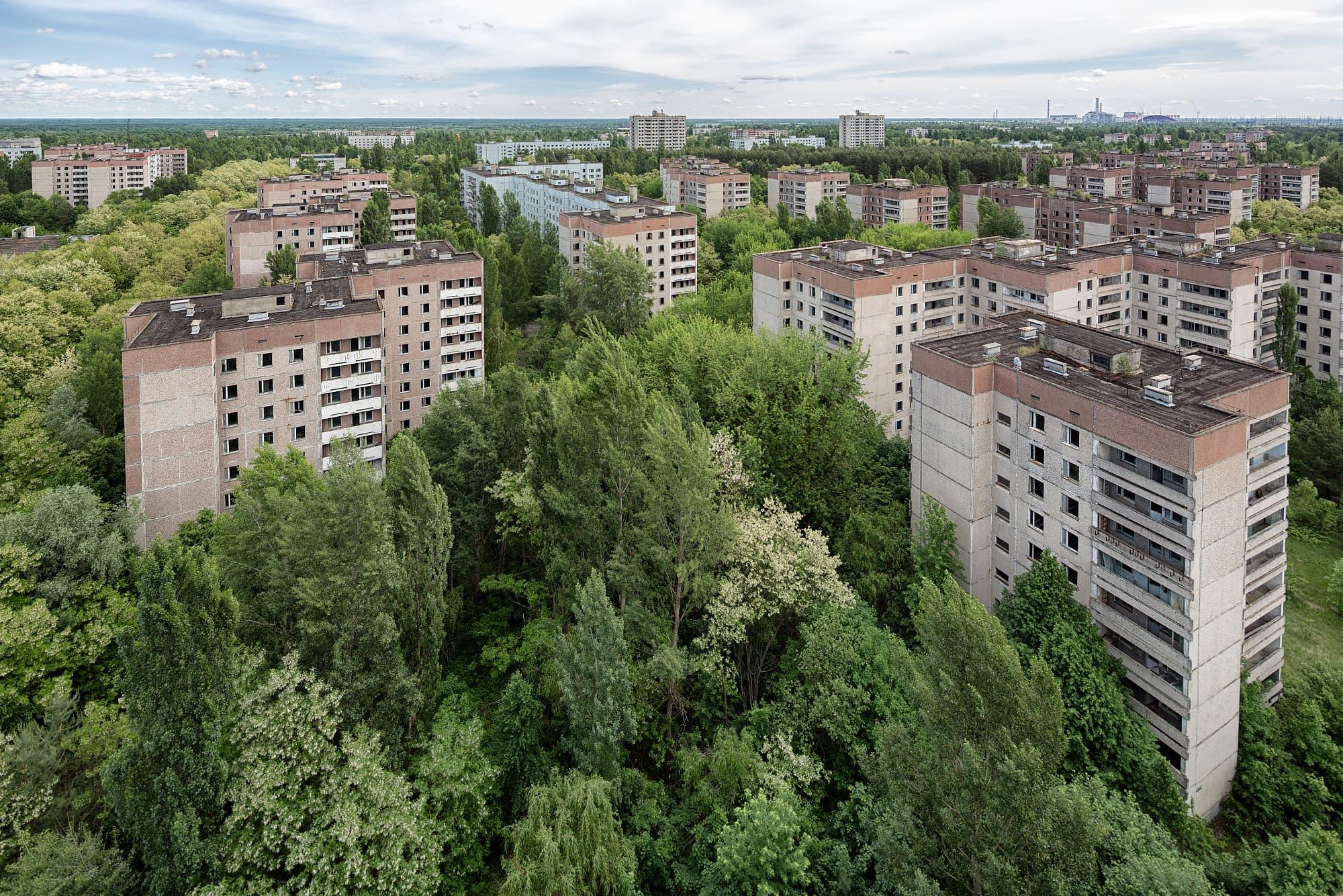 Tschernobyl Natur