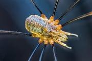 Nahrungskette: Epische Kämpfe zwischen Wurm und Spinnentier gefilmt