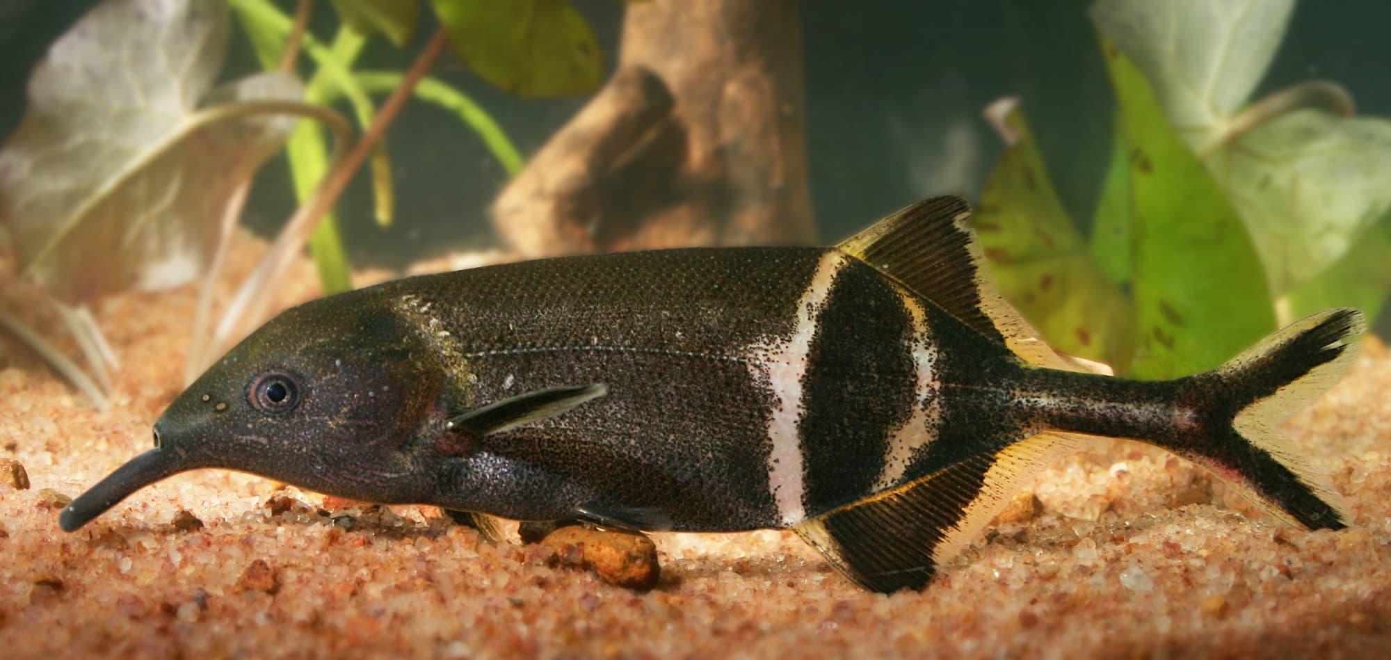 Wahrnehmung: Fisch sieht Farben auch im Dunkeln - Spektrum der ...