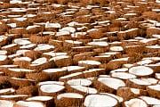 Wundermittel Kokosöl: Kokos-Hype: Steigende Nachfrage ist kritisch
