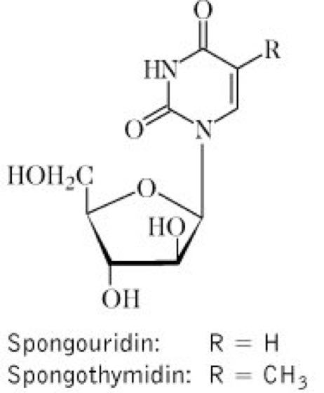 Marine Wirkstoffe - Lexikon der Arzneipflanzen und Drogen
