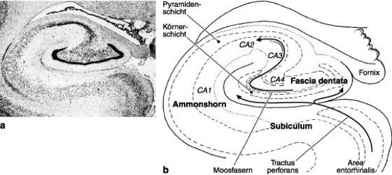 Hippocampus Funktion