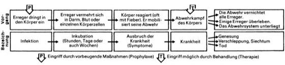 Infektionskrankheiten - Lexikon der Biologie