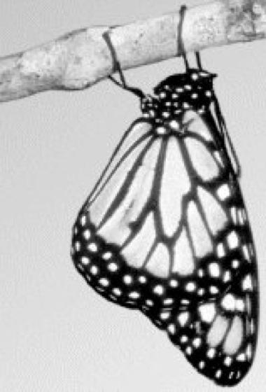Monarch - Lexikon der Biologie