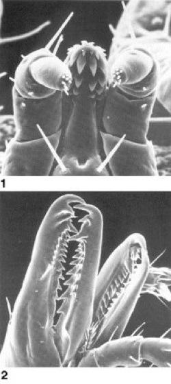 Mundwerkzeuge - Lexikon der Biologie
