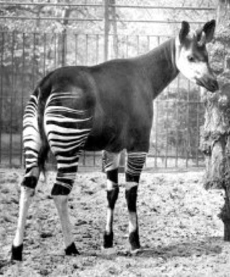 Okapi Lexikon Der Biologie